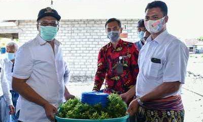 Industrialisasi Sektor Kelautan dan Perikanan NTB, Budidaya Lobster dan Rumput Laut Kian Menggeliat