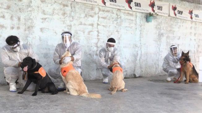 Los Angeles Antisipasi Flu Anjing yang Melonjak Sejak Agustus