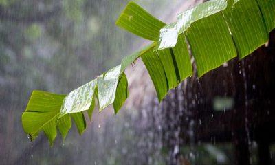 BMKG: Hujan Lebat Diprediksi Bakal Terjadi di Sejumlah Wilayah