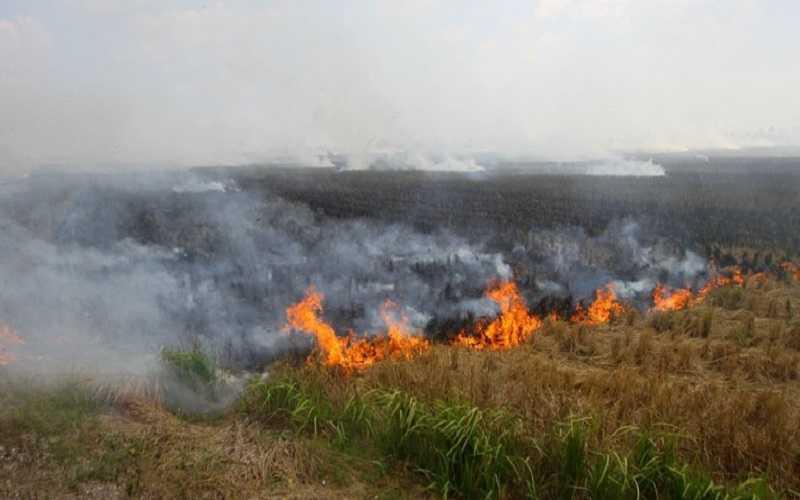 Waspadai Karhutla, BMKG Sebut NTT Masuki Musim Kemarau