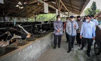 Menkop Teten Masduki Sebut Jokowi Ingin Koperasi Pangan Diperkuat