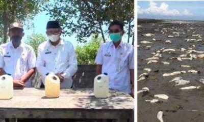 Warga Desa Kuala Indah Batubara Gempar, Ribuan Ekor Ikan Mati Mendadak di Pantai Datuk