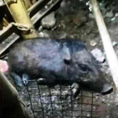 Polisi Bungkar Kuburan dan Amankan Kuburan Diduga Babi Ngepet di Sawangan Depok