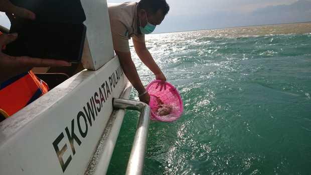 KKP Lepasliarkan Puluhan Ribu Benih Lobster di Banyuwangi