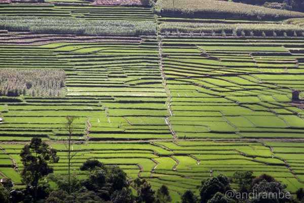 Sumatera Utara Surplus Beras 325.587 Ton