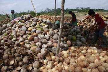 Pacu Pertumbuhan Ekonomi Daerah, Gubernur Sumatera Selatan Mulai Andalkan Ekspor Buah kelapa