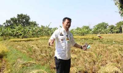 Kata Mentan, Petani Indonesia Bertambah 8 Juta Orang karena Pandemi Covid