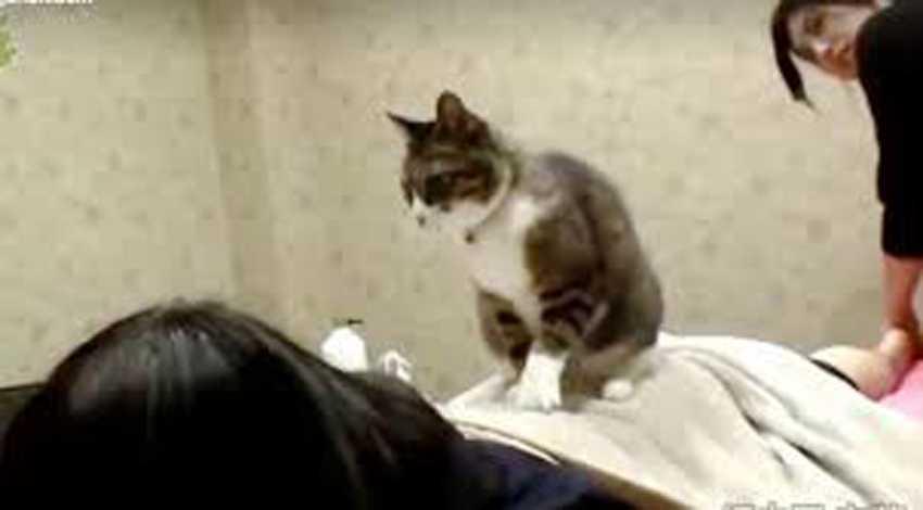 Ini Alasan Mengapa Kucing Gemar Memijat Tuannya