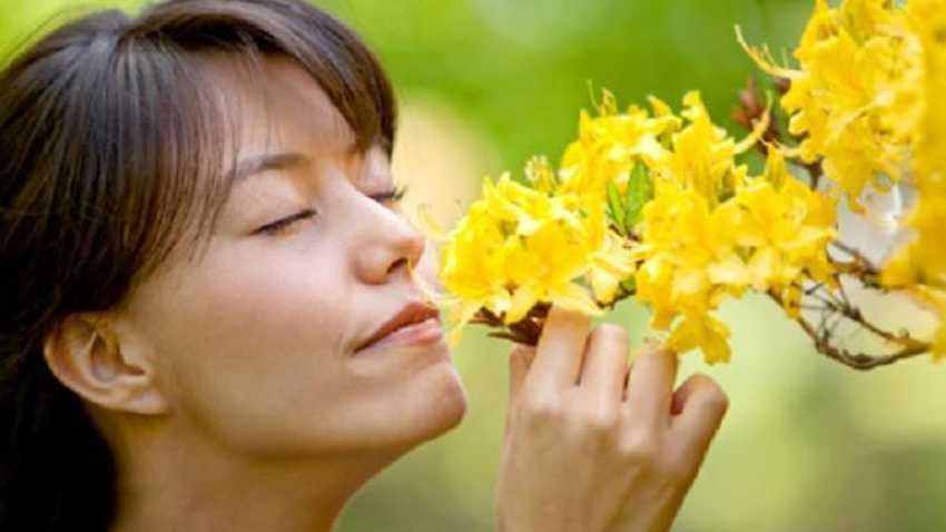 Begini Cara Kembalikan Indra Penciuman Akibat Anosmia