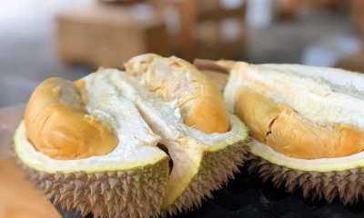 Benarkah Makan Durian Saat Hamil Bisa Membahayakan Janin?