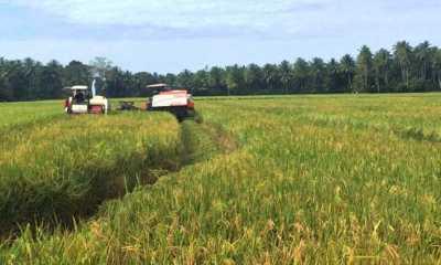 Selama Tak Ada Anomali Cuaca, Kemarau Tahun Ini Masih Aman untuk Produksi Pangan