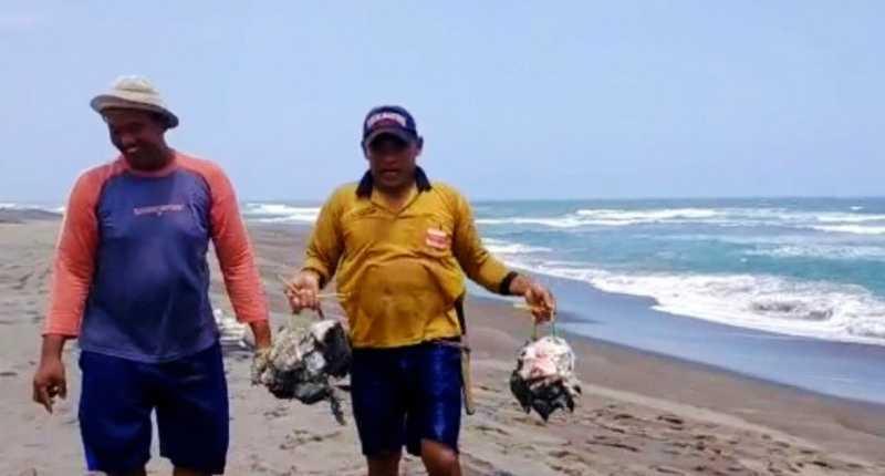 Paus Tutul Sepanjang 4 Meter Terdampar di Pantai Ciraragan Cianjur