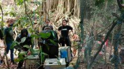 Berama Alobi Babel, PT Timah Lepasliarkan 400 Satwa Langka di Hutan Lindung