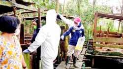 Pemkab di Kalteng Diminta Sikapi Temuan Demam Babi Afrika